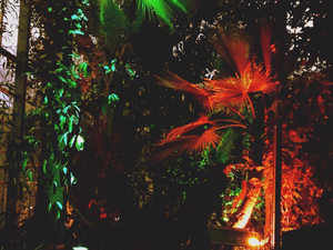 Botanic night
